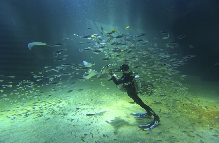 """Gli Acquari di Costa Edutainment aderiscono a """"Which Fish?"""""""