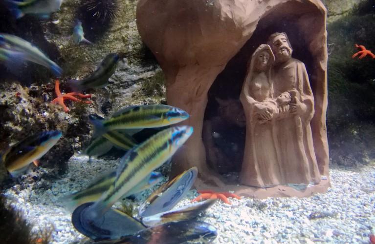 Natale all'Acquario di Cattolica
