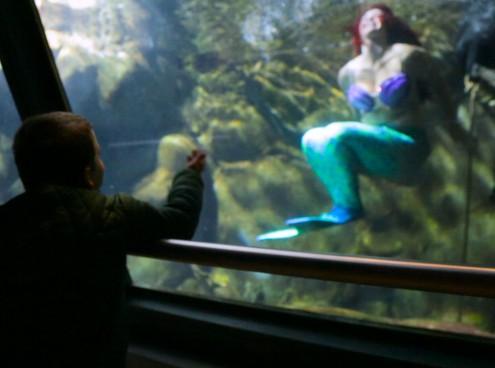 Andrea, malato di leucemia, incontra la Sirenetta Ariel all'Acquario