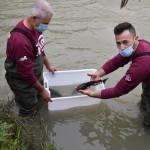 Gli storioni dell'Acquario ripopolano Cesena e il Delta