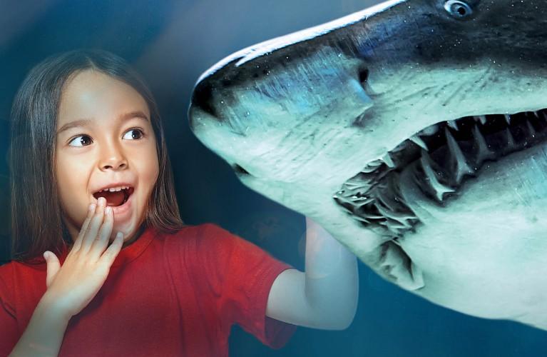 Più di 10.000 animali marini
