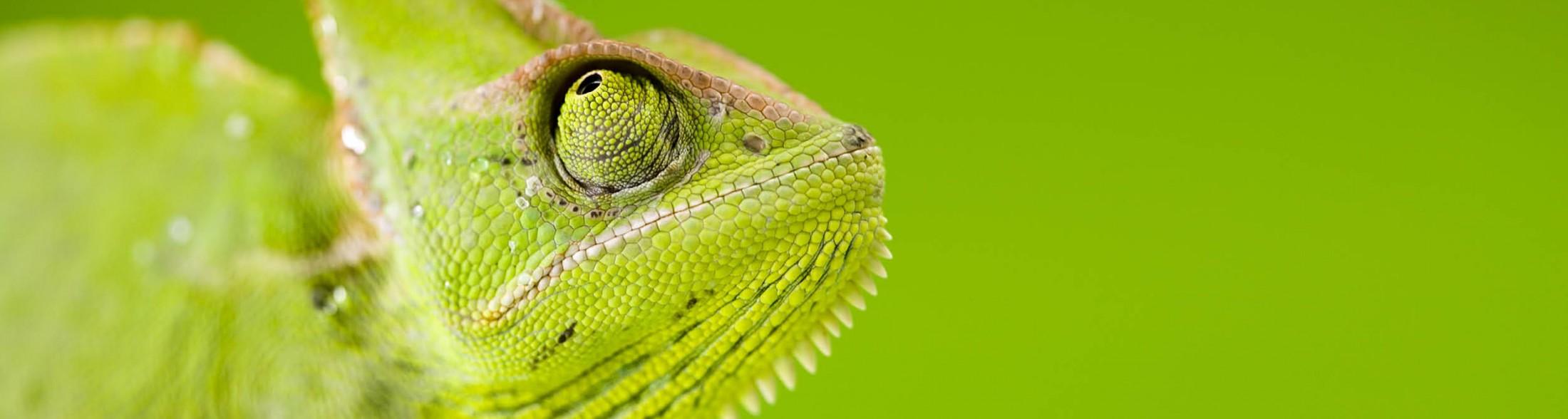 Ingresso verde