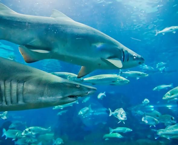 La grande vasca squali