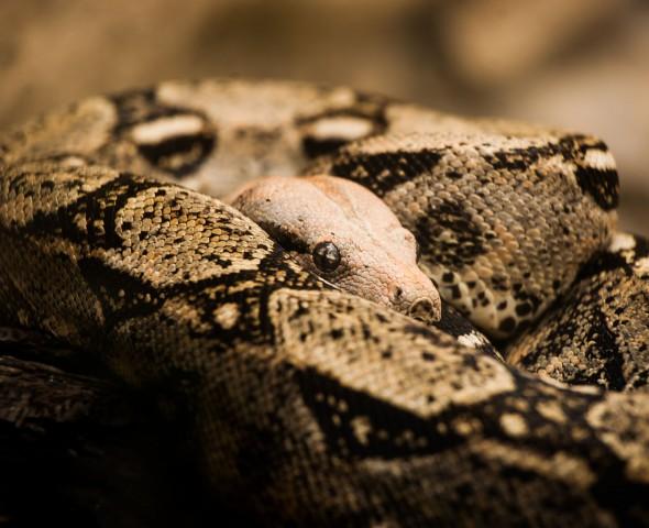 I serpenti