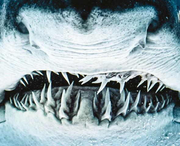 Corpo e denti
