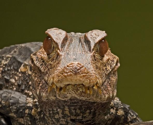 La Famiglia degli Alligatori