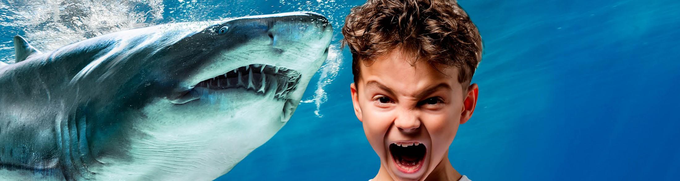 Notte con gli squali